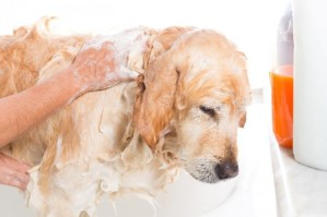HAPPY DOG SHOWER WITH OATMEAL SOAP