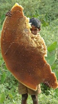 Honey-wild-raw
